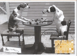 2011 NETHERLANDS Draughts Checkers