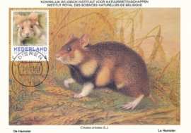 þþþ - Zoogdieren Hamster