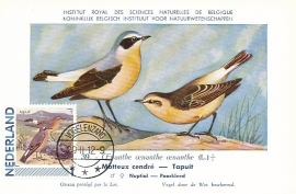 B039 NEDERLAND Tapuit