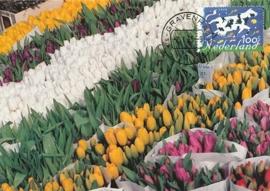 ® 1995 - CATA 1630 Tulpen