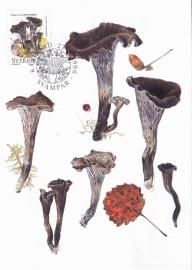 1996 SWEDEN - Mushroom Black horn of plenty