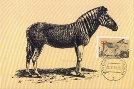 1988 NETHERLANDS Zebra Equus quagga