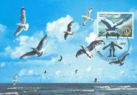 1977 BELGIUM - Seagull