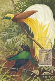 ®®®®® 1954 CATA 26 NNG Paradijsvogel Hollandia-Stad