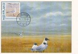 B189 NEDERLAND Kokmeeuw