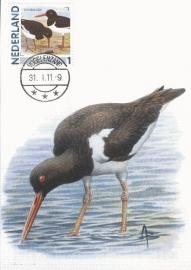 B126 NEDERLAND Scholekster