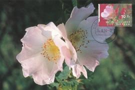 ® 1994 - CATA 1601 Viltroos