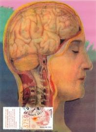 ® 2011 - CATA 2792 Hersenen