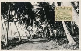 © 1932 - NAURU Palm trees