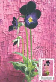 þþþ - Seasons 2012 Viola tricolor