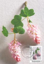 þþþ - Seasons 2012 Ribes sanguineum