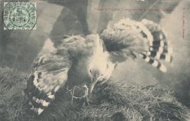 © 1912 - NEW CALEDONIA - Kagu bird