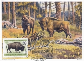1961 HUNGARY - Bison Wisente