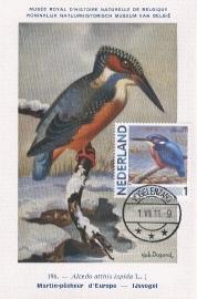 B014 NEDERLAND IJsvogel