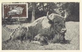 1956 GERMANY DDR Bison Wisente