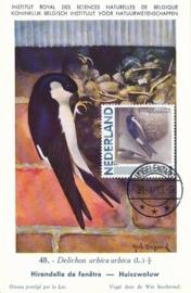B050 NEDERLAND Huiszwaluw