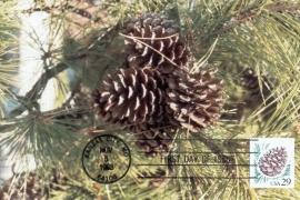 1993 USA - Pinecone