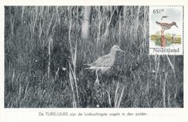® 1984 - CATA 1303 Tureluur