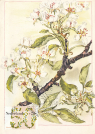 ® 1982 - CATA 1262 Appelbloesem