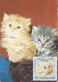 1968 HUNGARY - Domestic cats