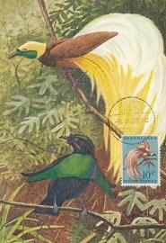 ®®®®® 1954 CATA 27 NNG Paradijsvogel Hollandia-Binnen