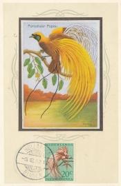 ®®®®® 1954 CATA 28 NNG Paradijsvogel Hollandia-Binnen