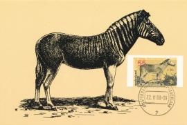 ® 1988 CATA 1402a Zebra