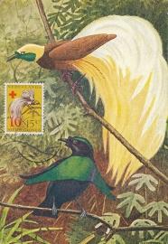 ®®®®® 1955 CATA 38 NNG Paradijsvogel