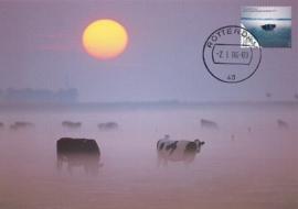 ® 2006 - CATA 2393 Koeien