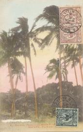 © 1912 - NEW CALEDONIA - Palm leaves