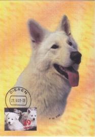 2003 NETHERLANDS White herding dog