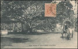© 1907 - CEYLON Trees - Leaves