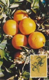 ®®® 1961 - CATA 355 - SURINAME Citrus