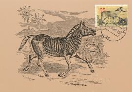 ® 1988 - CATA 1399 Zebra
