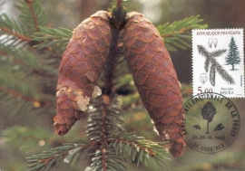 1985 FRANCE - Picea abies