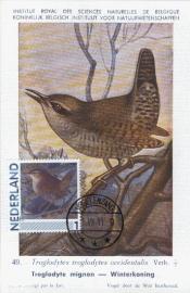 B020 NEDERLAND Winterkoning