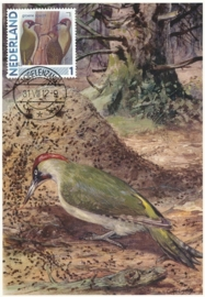B178 NEDERLAND Groene specht