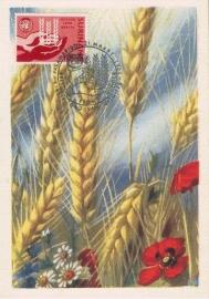 1963 SURINAM - Against hunger - Ear of corn