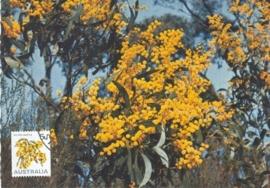 1976 AUSTRALIA - Mimosa