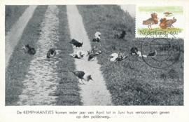 ® 1984 - CATA 1302 Kemphaan