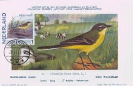 B013 NEDERLAND Gele kwikstaart