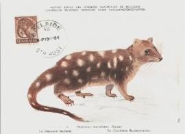 1964 AUSTRALIA - Dasyrus