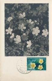 ®® 1955 NVPH 248 NED. ANTILLEN Anglo