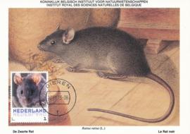 þþþ - Zoogdieren Zwarte rat