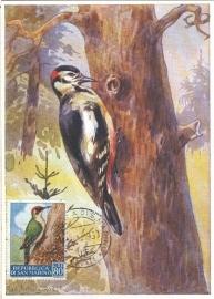 1960 SAN MARINO Woodpecker