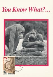 ® 1988 - CATA 1401 Orang-oetan