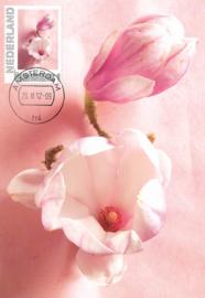 þþþ - Seasons 2012 Magnolia soulangeana