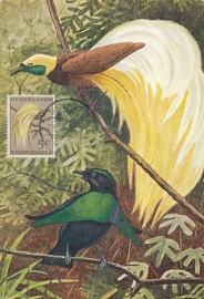 ®®®®® 1954 CATA 26 NNG Paradijsvogel Manokwari
