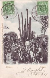 © 1904 - MEXICO Opuntia cactus