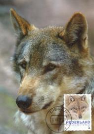 þþþ - Zoogdieren Wolf